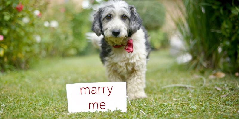 Pet Proposal
